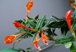 Тенелюбивые комнатные цветы и особенности ухода за ними