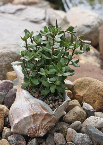 Комнатные растения для семейного счастья и благополучия в доме: признанные зеленые обереги