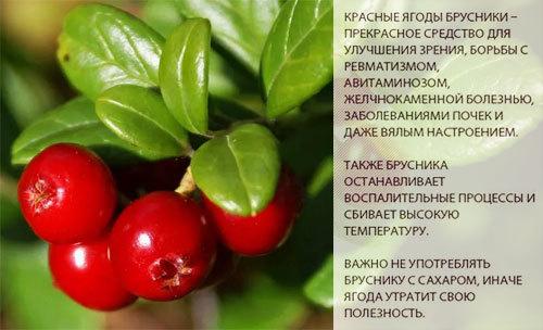 Брусника: полезные свойства для здоровья и противопоказания, калорийность и состав, рецепты напитков и блюд